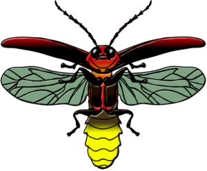 Firefly not blinking